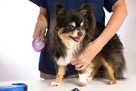 mobile dog grooming learn how to build it yourself