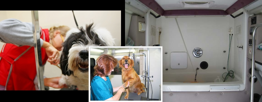 Mobile dog grooming learn how to build it yourself solutioingenieria Gallery