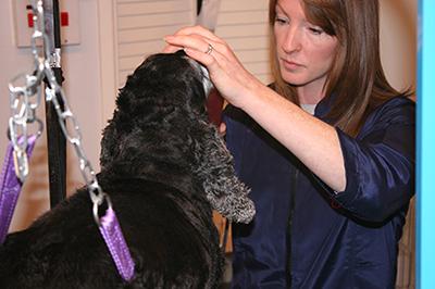 dog-grooming3